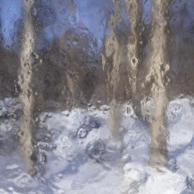 Birches of Birchton
